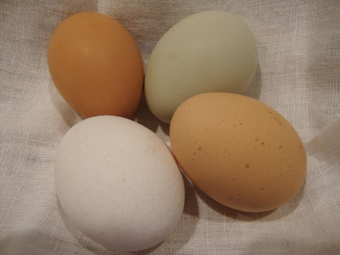 Ingredient Feature: The Miraculous Egg